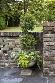 potted topiary with trailing jenny and white flowers Landscape Design, Garden Design, Eco Green, Outdoor Living, Outdoor Decor, Container Flowers, Pool Landscaping, Garden Planters, Topiary