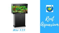 Rent A Fish Tank - Rent Aquarium http://rentaquarium.co.uk/our-products/ #RentAquarium, #RentanAquarium, #AquariumLondon, #LondonAquarium, #London