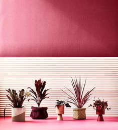 Here, we examine a new crop of leafy greens that are starting to catch our eye: colourful indoor plants in shades of deep purple, intense magenta, blazing reds and soft silvers - guaranteed to brighten up any home interior. Big Indoor Plants, Container Plants, Plant Containers, Heuchera, Foliage Plants, Shade Plants, Deep Purple, Houseplants, Greenery