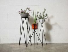 indoor plant ideas, easy indoor plants for the plant killer, wire plant holder,