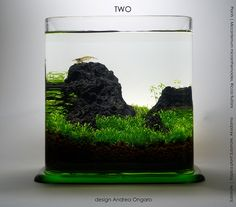two liters | volume 2 liters, substrate and fertilization with Tropica products. Situation: day 20
