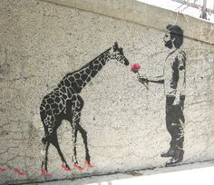 A giraffe and a rose
