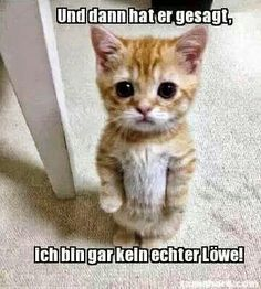 Super cute animals, animals and pets, curious cat, kittens cutest, cats and Funny Animal Jokes, Funny Cat Memes, Cute Funny Animals, Funniest Animals, Cats Humor, Animal Humor, Memes Humor, Funny Cute Cats, Funny Horses