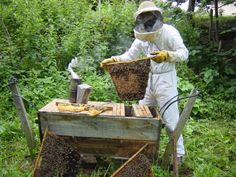 Everything you need to know to beome a beekeeper.......great website!