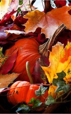 harvest moon, falling leaves...