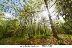 Stock Photo: Bright sunlight through trees in sunny summer forest in Aulanko nature park in Finland -