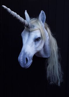Unicorn. Taxidermied unicorn. Hand made Unicorn by BrokenHare- Animal Friendly Faux unicorn head for my wall