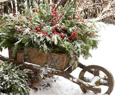 charming wheel barrow full of Christmasy greenery..