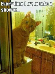 Funny cat looks so puzzled.  Why are you doing that?
