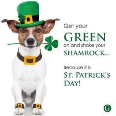 Wishing all our followers a happy St. Patrick's Day!!! #Warthogs #george #georgeguvon #GuvonHotels #stpatricksday Passion For Life, Real Dog, Tell The World, Real Friends, The Help, Followers, Day, Fans, True Friends