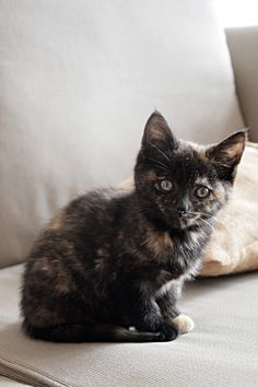 Tortoiseshell | Foster Kittens by Courtney Field, via Behance