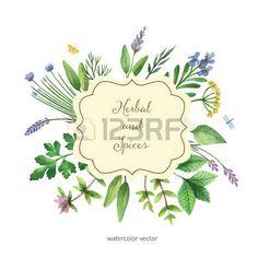 Risultati immagini per dipingere erbe officinali