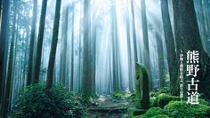 Wakayama: Kumano Kodo Pilgrimage Routes 和歌山: 熊野古道 #japan #sightseeing