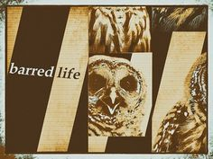 barred-life-logo-pumpkin-spice-owl