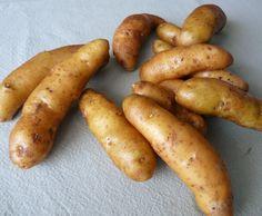 Laratte Potato