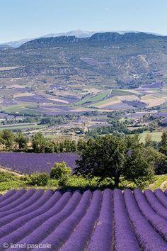 Lavendel fält, vet någon var? Valley of Lavender- where is this?