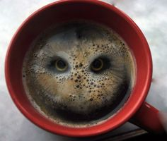 There's an owl in my coffee! (I am not sure how they did it, but it's totally cool!)