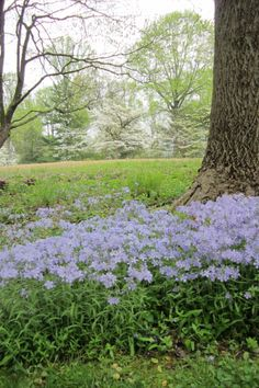 Spring is here and it's time for the annual Mt. Cuba Center Wildflower Celebration. Learn more at http://www.visitdelaware.com/includes/events/index.cfm?action=displayDetail&eventid=22634.