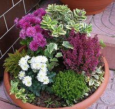 Podzimní aranžování na venkovní schodiště Winter Planter, Fall Planters, Flower Planters, Flower Pots, Balcony Flowers, Outdoor Flowers, Moon Garden, Deco Floral, Winter Flowers