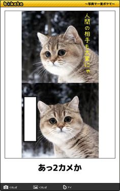 画像 Good Jokes, Funny Animals, Dog Cat, Humor, Cats, Unique, Blond, Gatos, Humour