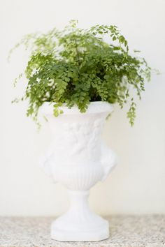 Maidenhair Fern: http://www.stylemepretty.com/living/2015/04/07/10-indoor-plants-you-cant-kill/