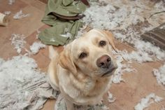 5 Things You're Doing To Make Your Dog Misbehave