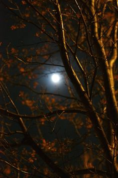 beautiful full moon in autumn season....