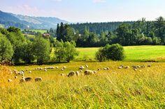 Countryside, Poland