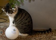 Larry the Downing Street Cat helps to decorate the Number 10 Christmas tree with a Dementia Friends bauble.