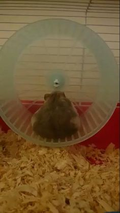 Hamster isn't too fond on cardio. Super Cute Animals, Cute Little Animals, Cute Funny Animals, Funny Cute, Cute Dogs, Cute Babies, Animal Jokes, Funny Animal Videos, Funny Hamsters