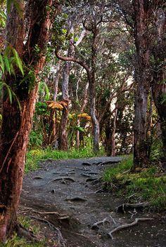 Hawaii Rain forest by WorldofArun, via Flickr