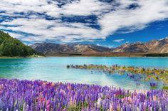 Lac Tekapo, Nouvelle-Zélande.