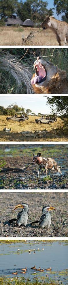 Botswana Safaris to Mombo Camp in the Okavango Delta