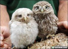 so there's a rumor that owls are the new kittens.  I would like to note that I loved owls way before the trend!!