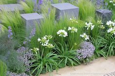 RHS Chelsea Flower Show 2014 by Karen Roe Agapanthus, boxwood, thymus, stipa and stone Garden Show, Dream Garden, Garden Art, Garden Design, Back Gardens, Outdoor Gardens, Garden Borders, Chelsea Flower Show, Ornamental Grasses