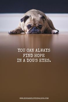 Dog Quote - You can always find hope in a dog's eyes.