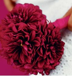 So want Dahlia's as a bouquet!! Or a mix with my other Fav Gerber Daisies:)