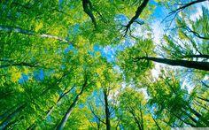 HANNU (@hansgi61) | Twitter forest sky view