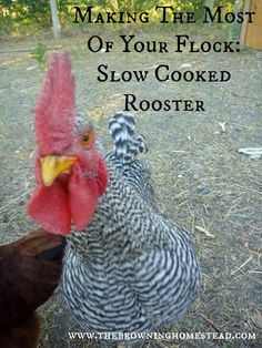 Slow Cooked Rooster: Making The Most Of A Mean Ol' Bird - The Browning Homestead