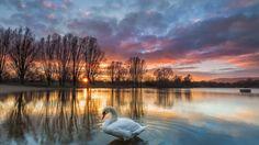 swan sunset lake samsung note5 hd wallpaper download