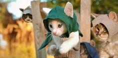 Assassin's Kittens: os assassinos mais fofos que você já viu! | Nerdivinas