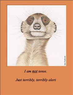"""I am not tense, just terribly, terribly alert. Wonderful art & humor from Jane Seabrook's """"FURRY LOGIC"""", book 1"""