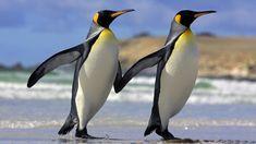 amazing-animals-on-beach-wallpaper.jpg (1920×1080)