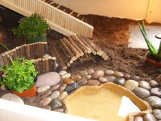 Esme & Hermans new home - Indoor Enclosures - Tortoise Forum