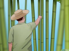 How to Cure Bamboo. Making crafts out of bamboo can be fun. However, before you can use bamboo you need to let it dry out. This process is called curing bamboo. If you leave bamboo to air dry, it can take 6 to 12 weeks. Food Business Ideas, Bamboo Building, Bamboo Construction, Bamboo Canes, Walking Sticks And Canes, Bamboo Furniture, Furniture Design, Bamboo Design, Gifts For Office