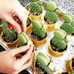 Mmmm, these macaron cacti and succulents look amazing! Repost from @cacti.cacti
