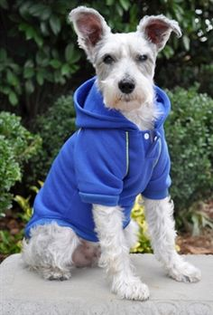 Sport Sweatshirt for your #Dog on Chilly #Fall Day Runs. #GearforPets