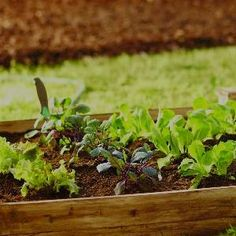 Growing veggies in the shade Some of the most common and beloved vegetable garden favorites are perfectly suited for shade, including:  Arugula Basil Celery Kale Lettuce Peas Potatoes Spinach