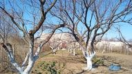 Řez stromů: Ořešáky   Dům a zahrada - bydlení je hra Plants, Plant, Planets