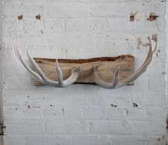 Naturally Shed Deer Antler Wall Mount/coat Rack/ Jewelry Holder/wall Decor…
